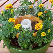 How to Create an Outdoor Centerpiece